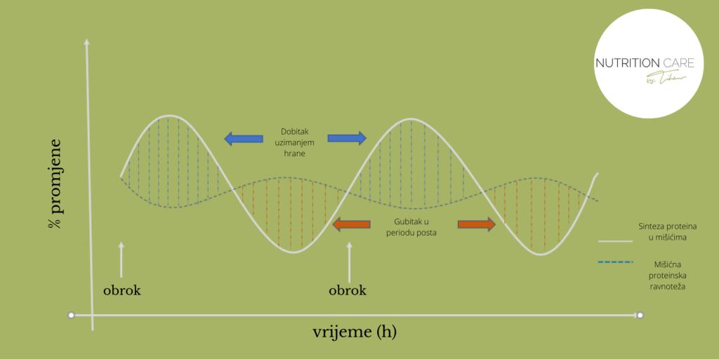 graf_proteinska_ravnoteza